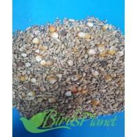 pigeon seed - Kabootar Seed کبوتر دانہ