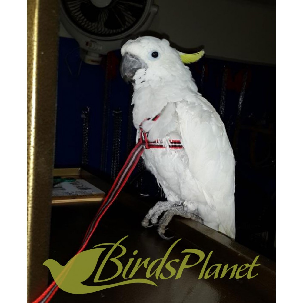 Adjustable Parrot Harness