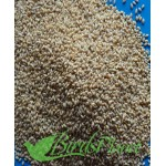 french white millet- دیسی کنگنی