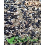 Seed Mix for all type of parrots